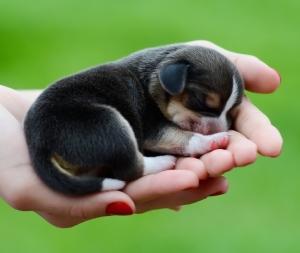 newbornpup