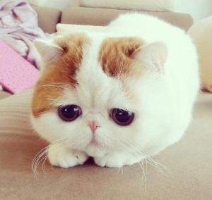 sad.kitty.02
