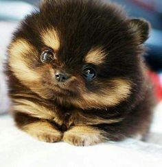 puppy.2